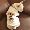 Summer Cloth Pet Dog Clothes Home Pet products Dog